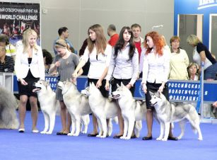 BEST IN SHOW kennel