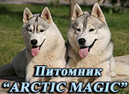 Питомник СИБИРСКИХ ХАСКИ ARCTIC MAGIC